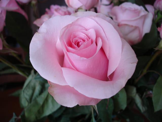 Rose en bouquet