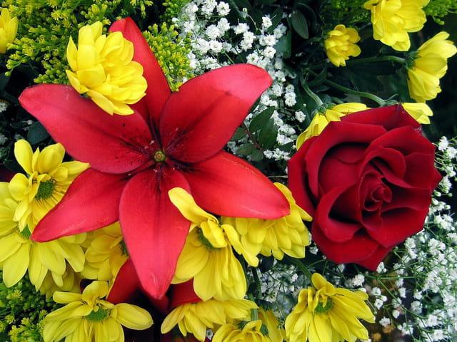 Rose rouge,lys ardent et chrysanthèmes