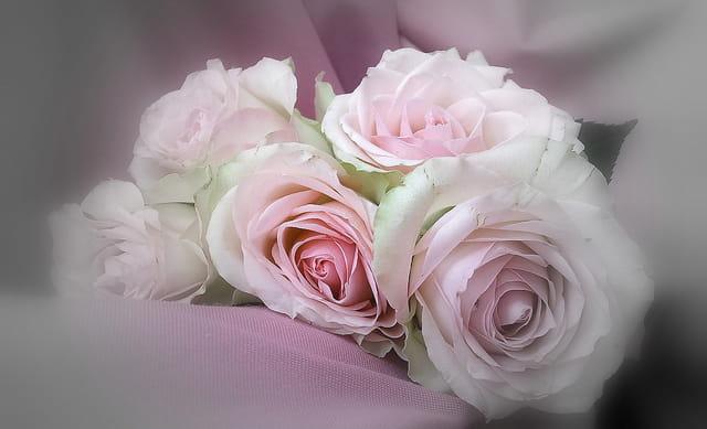 Roses douceur