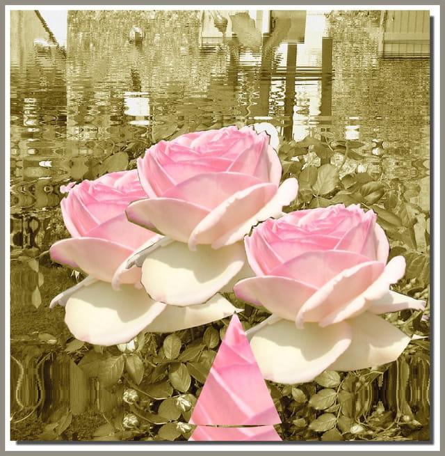 Roses en miroir