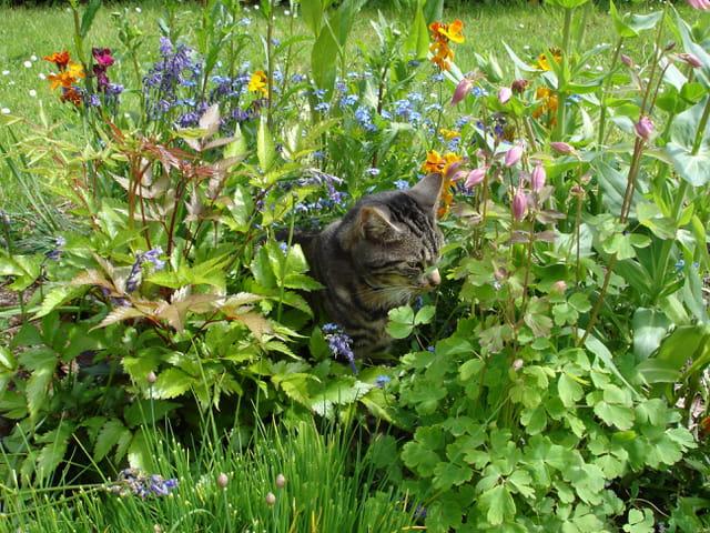 Igor dans le jardin