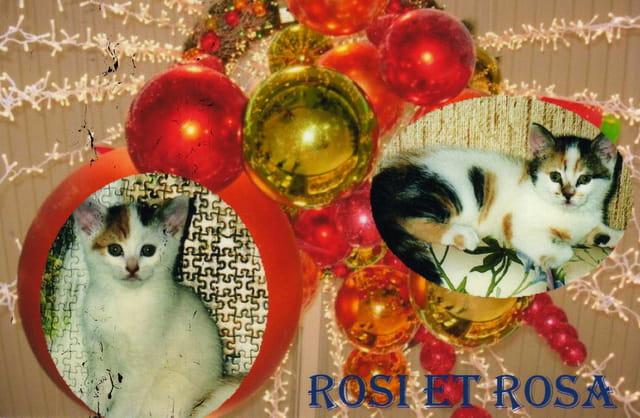 Rosi et Rosa