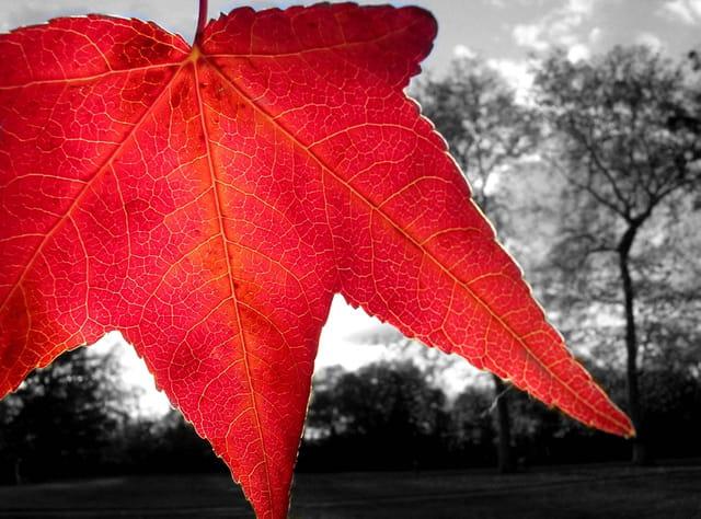 Rouge d'automne