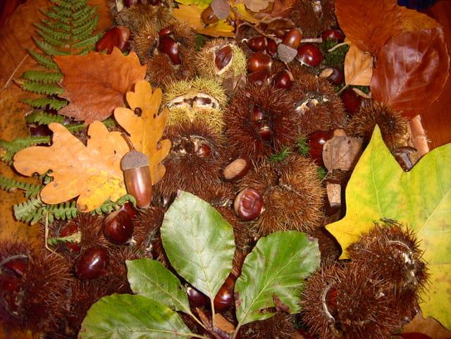 Rousseur d'automne