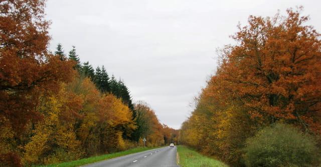 Route automnale