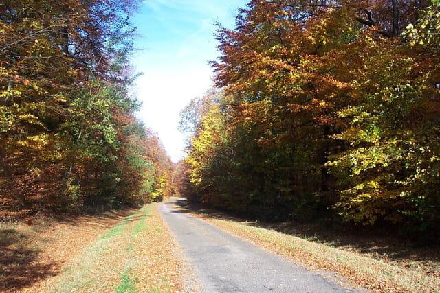 Route automnale à saulieu