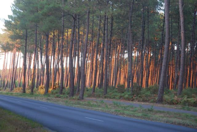 route des Landes sous le coucher de soleil