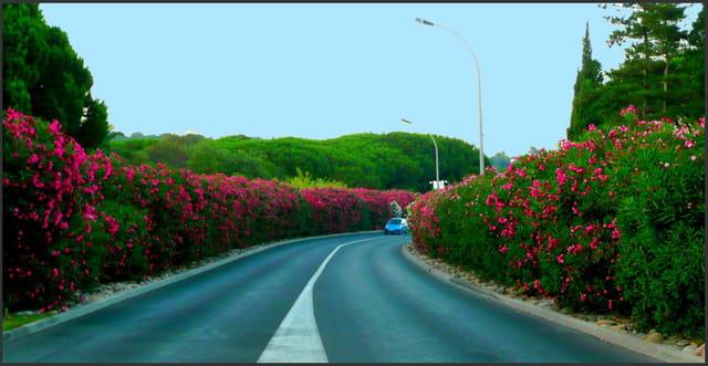Route fleurie en Provence