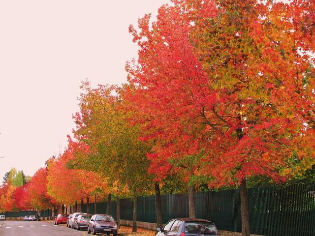 Rue aux couleurs d'automne.