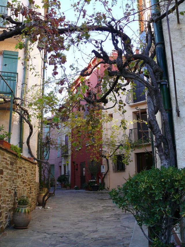 Rue des Treilles