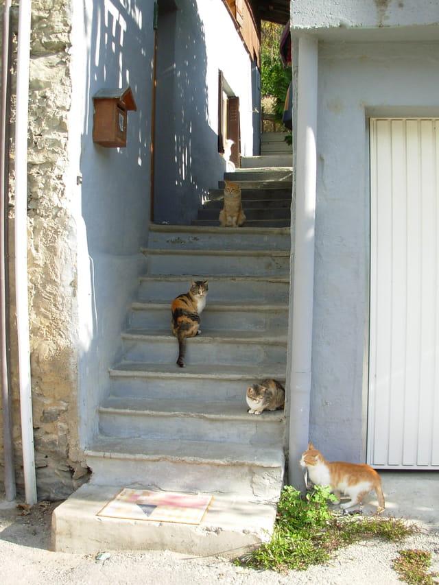 Ruelle des chats