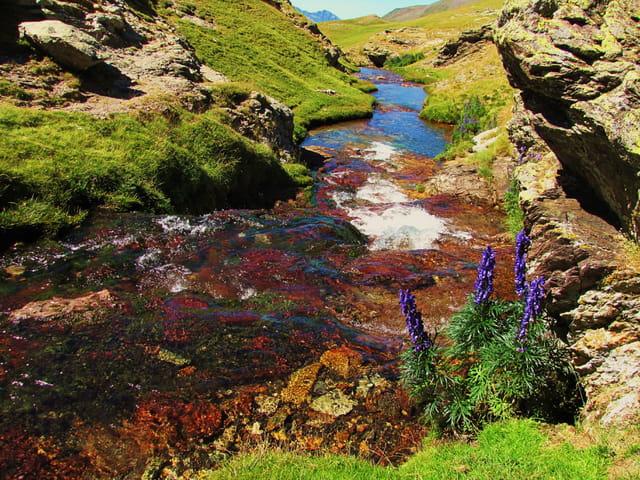 Ruisseau de montagne.
