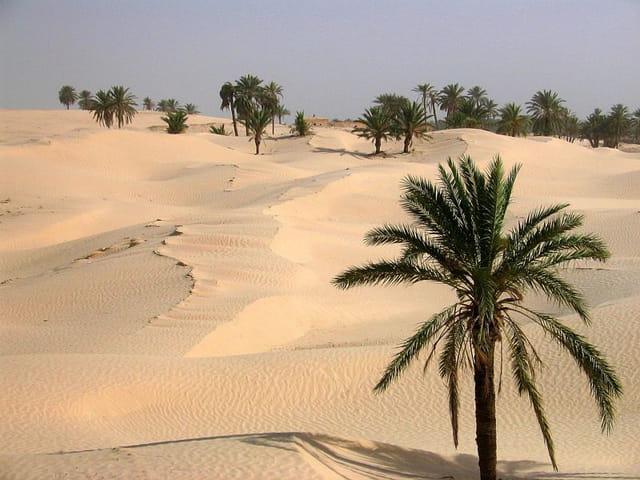 Sable et palmiers