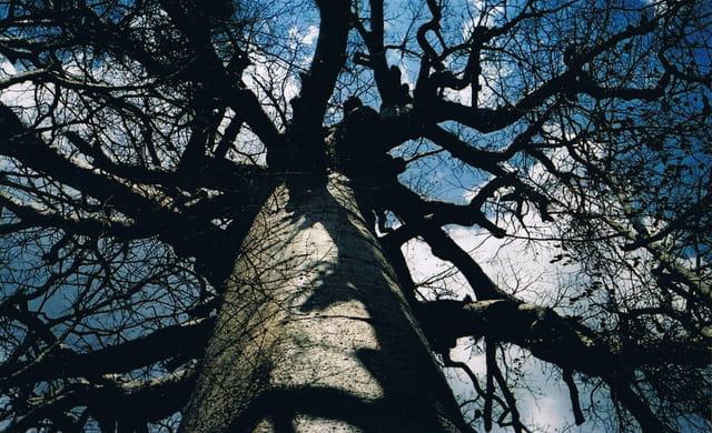 Sacré baobab