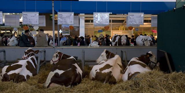 Salon de l'agriculture 2008, entre terroir et fast food