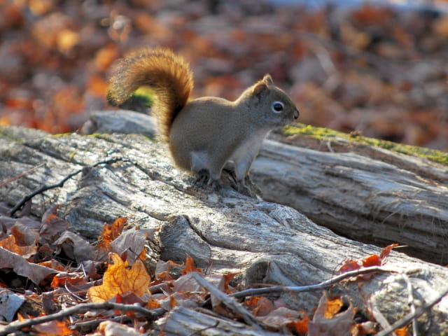 Salut l'écureuil !