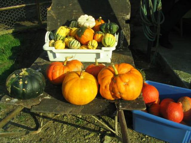 Saveurs d'automne