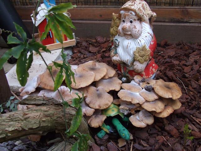 Un champignon pour conte de fée