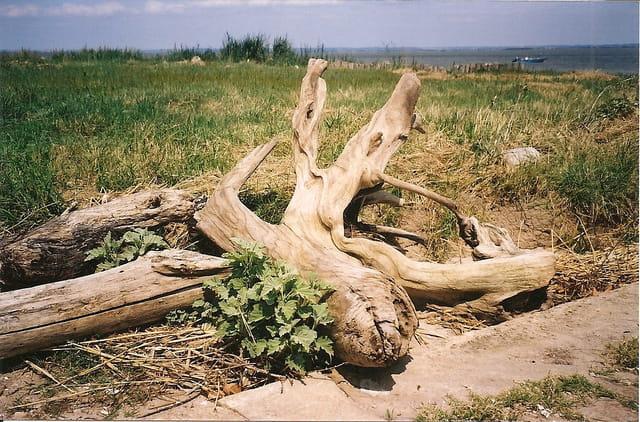 Sculpture végétale
