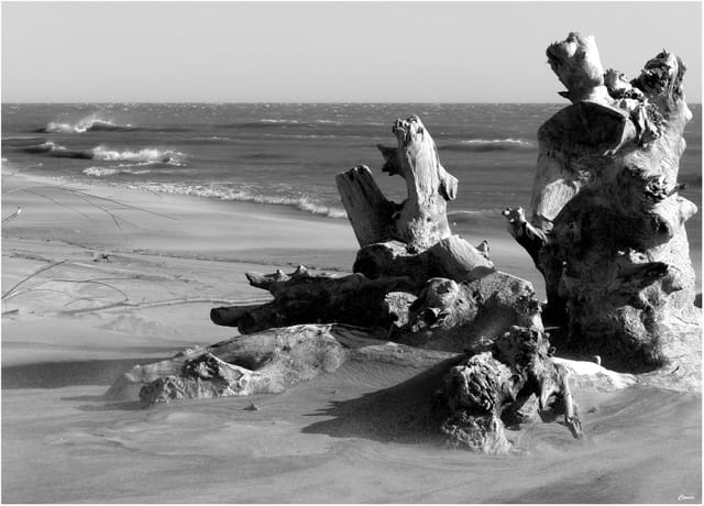 Sculptures naturelles...
