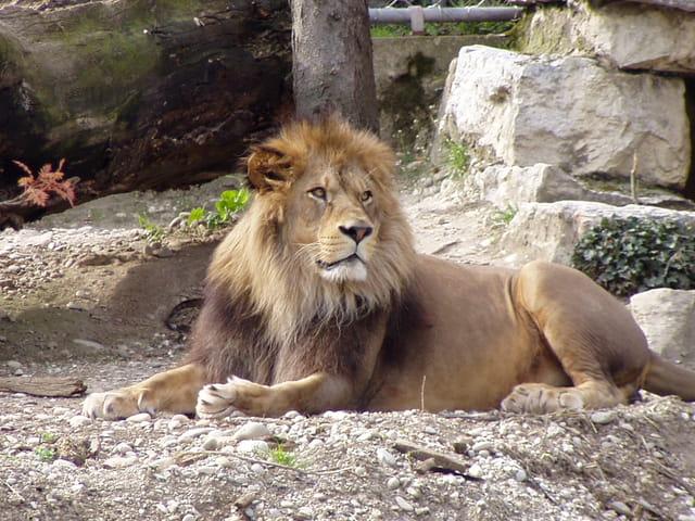 Seigneur lion