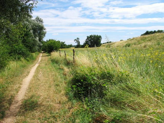 Sentier bords de Loire