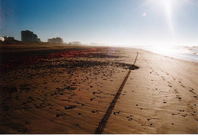 Sentier de plage