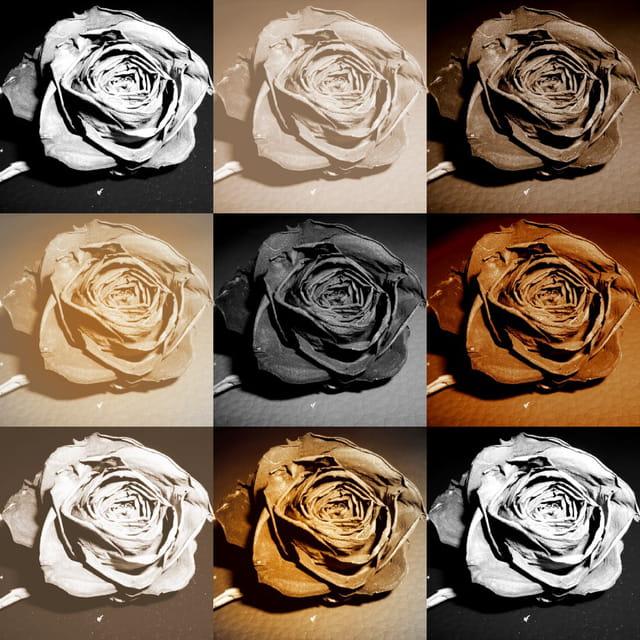 """Serie """"roses"""""""