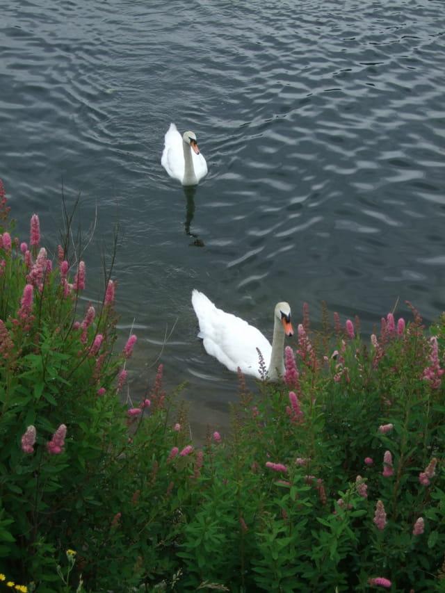 Signes sur le Lac de Gérardmer