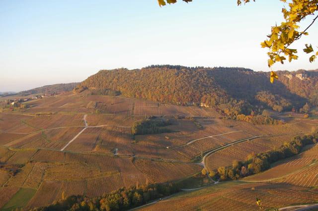 Soir d'automne sur le vignoble