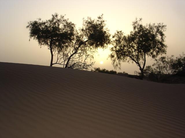 Soleil couchant sur buisson désert