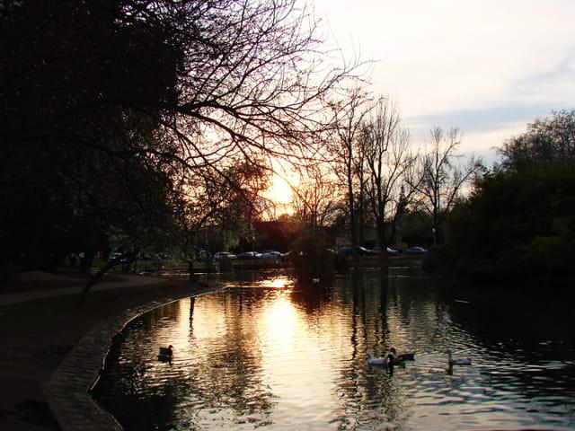 soleil couchant sur le lac aux canards