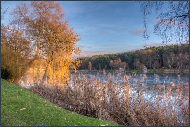 Soleil d'hiver sur l'étang