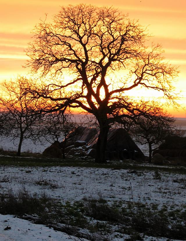 Soleil d'hiver sur la campagne