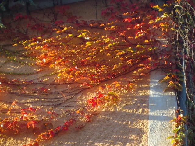 Soleil de feuilles