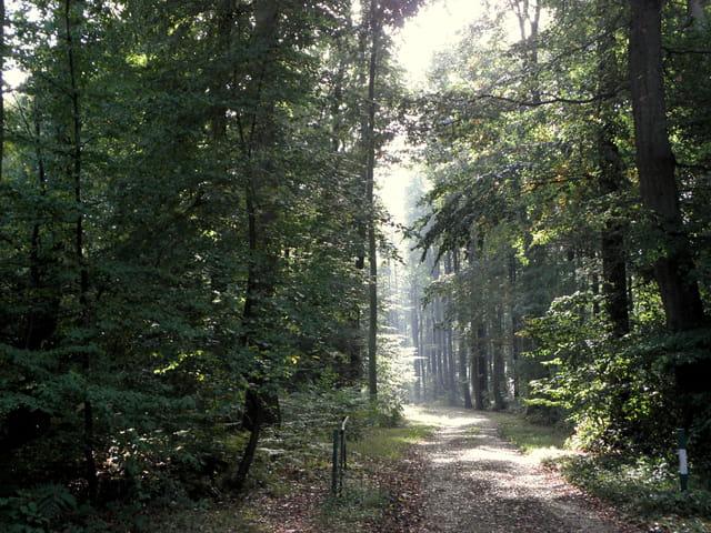Soleil en forêt