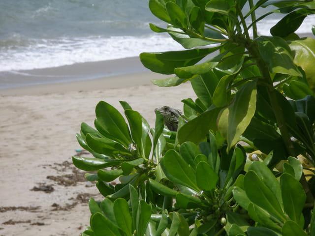 Soleil, plage et la compagnie
