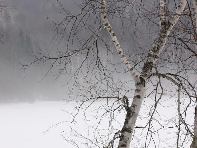 Solitude sur le lac