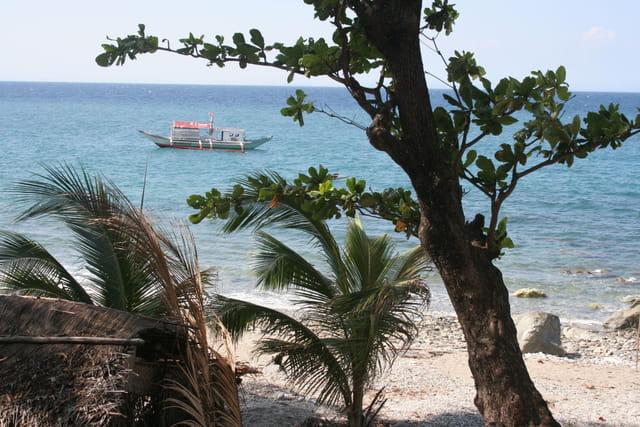 Solitude tropicale