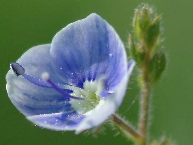 Somptueuse fleur ;-)