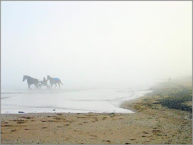 Sortie de chevaux