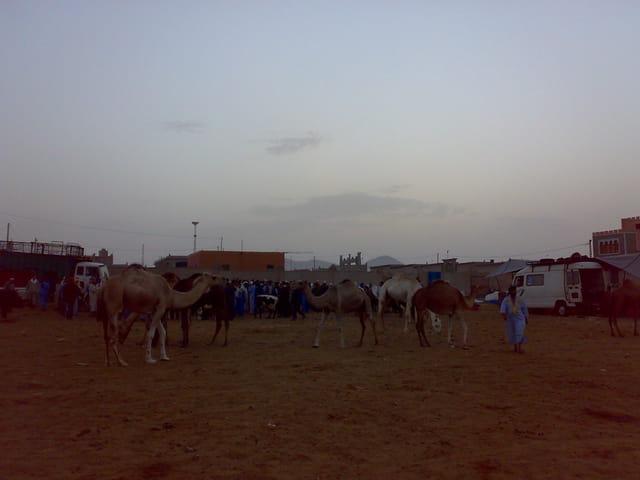 Souk du chameaux