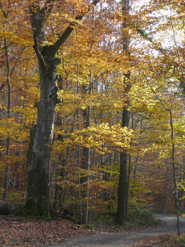 Sous-bois charolais à l'automne