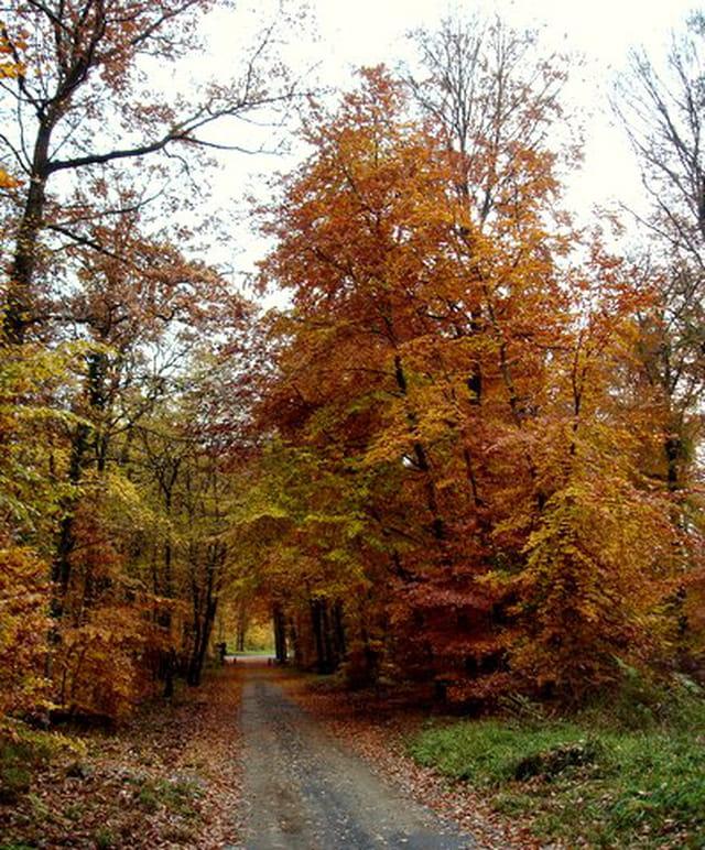 Sous bois d'automne 1