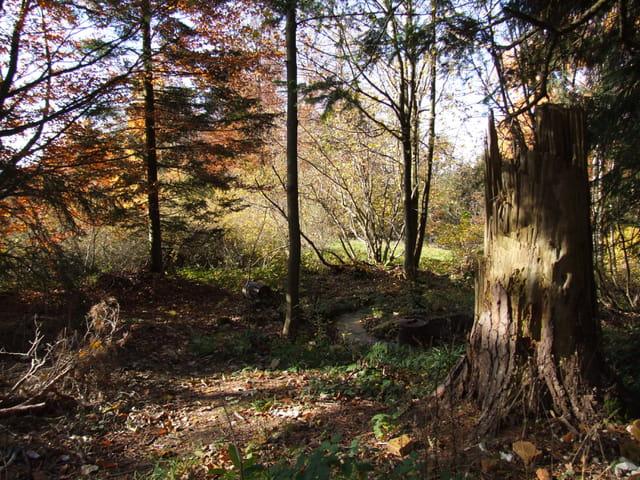 Sous-bois en Forêt Noire-Allemagne