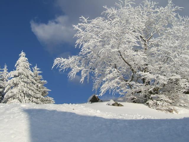 Sous la neige de printemps