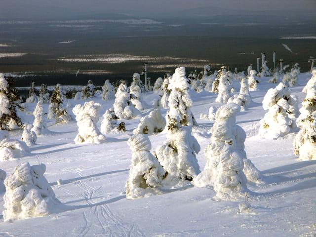 Sous la neige, les sapins