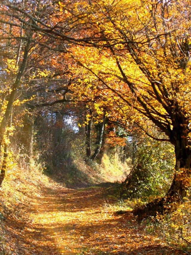 Spirale d'automne