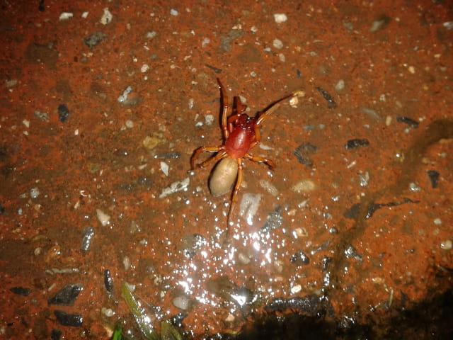 Sublime araignée