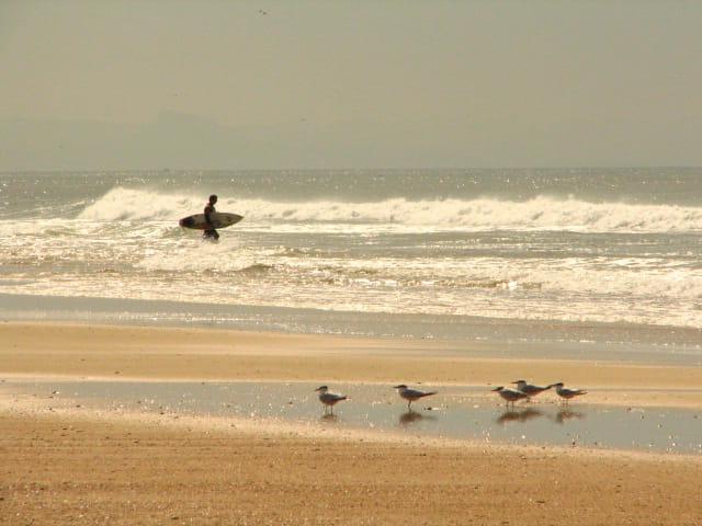 Surf et sternes